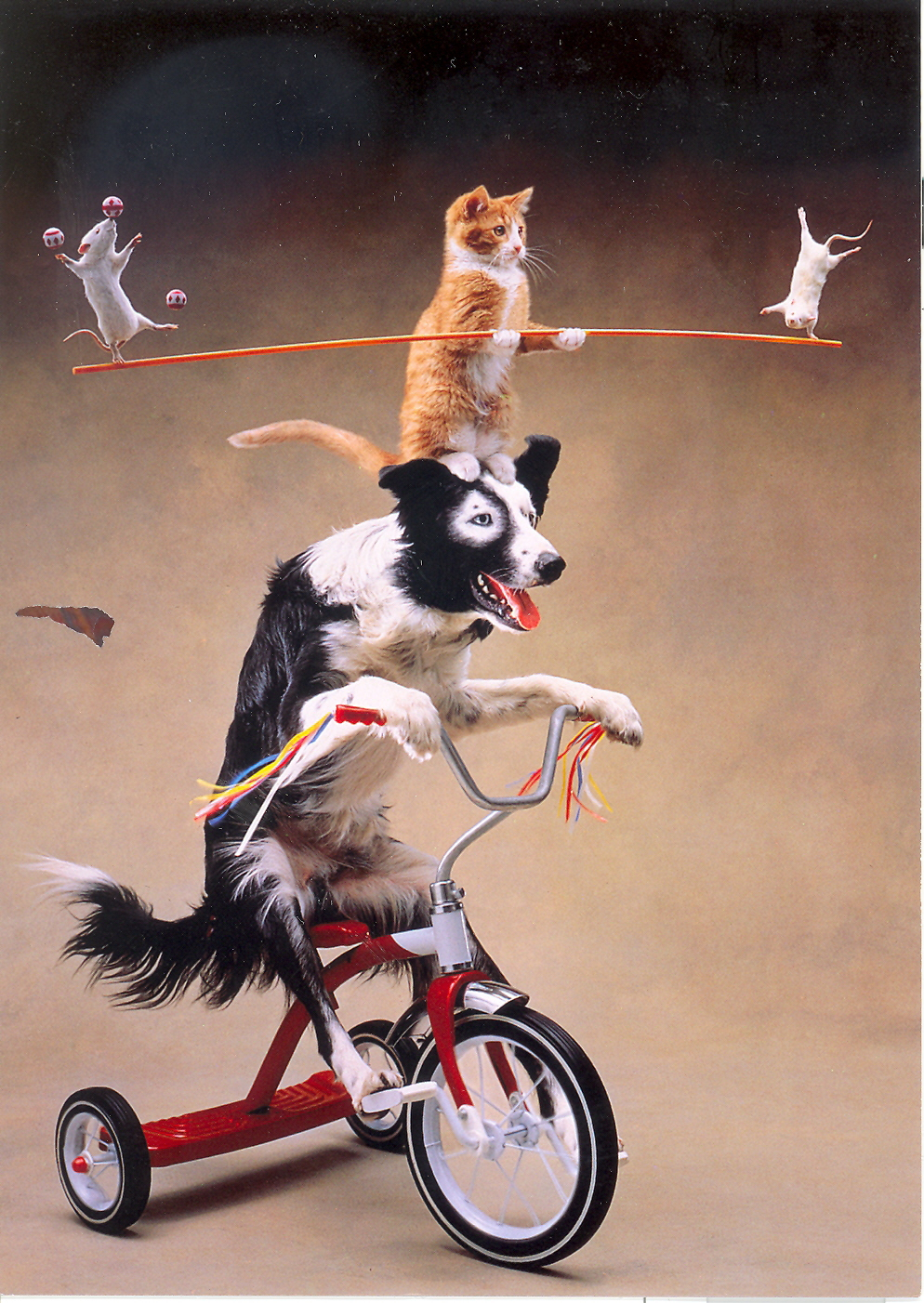juggling animals